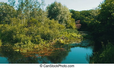 Nature on the River, Green Vegetation on the Banks of the...