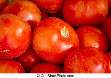 Fresh picked organic red tomatoes - Close up of fresh picked...