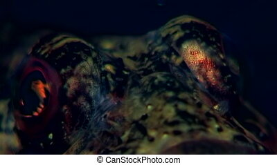 Sea goby exotic fish underwater on seabed. Unique dramaturgy...