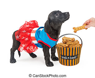 Puppy Trick-Or-Treating for Biscuits - Cute puppy wearing...