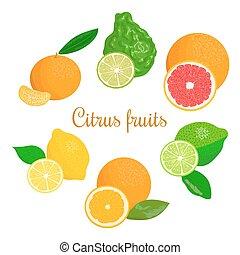 Fresh Citrus set. orange, lemon, lime, bergamot, tangerine...