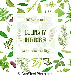 Cooking herbs seamless pattern vector set - Cooking herbs...