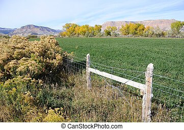 Irrigated Utah Desert Farm in Fall