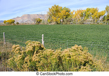 Irrigated Utah Desert Farm in the Fall