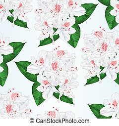 Seamless texture flowers white rhododendron with leaves...