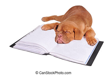 Puppy sleeping on a document folder