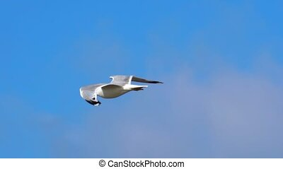 SLOW MOTION: A bird gull flies against the sky. She rises...