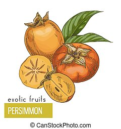 Persimmon, slice, fruits and leaves. Exotic fruits, hand...