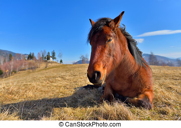 Peaceful sleepy horse on a meadow in early spring