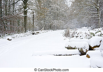 Beautiful winter forest snow scene with deep virgin snow