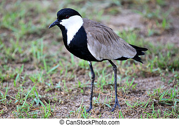 Bird - Wildlife Sanctuary - Uganda - Bird - Wildlife...