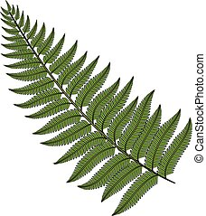 Color image fern leaf. Isolated vector object. - Color image...