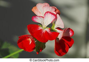Fresh flower closeup