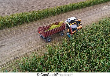 Corn harvest - Aerial view of working tractor and corn...