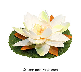 Lotus flower - Decorative lotus flower isolated with...