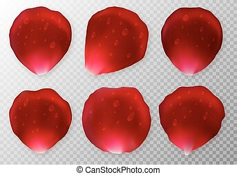 Collection of rose petals with drops of dew