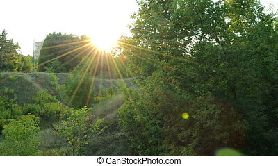 beautiful sunset among the green trees outdoors