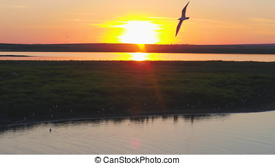 Seagulls bird fly above the river at sunset time. Birds fly at sunset. Sunset on the river, aerial