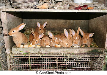 few rabbits eating in their hutch