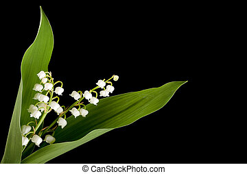 Muguet twig - Twig of muguet or lilly of the valley
