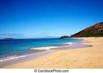 Tropical beach with clear blue sky - A tropical beach with a...