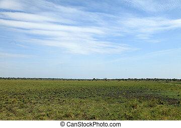 füves, lapályok, táj, -, Uganda, afrika
