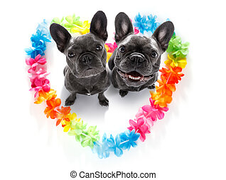 happy valentines dogs - couple of french bulldog dogs in...