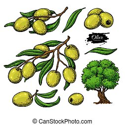 Olive set. Hand drawn vector illustration of branch with...
