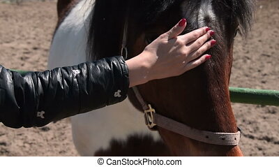 Woman stroking horse - Close-up shot of a woman stroking...