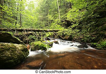 Forest stream flowing from the mountains.