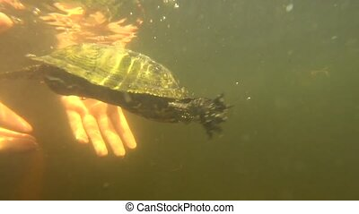 Turtle released into the water