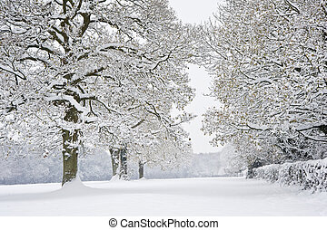 Winter forest snow scene - Beautiful Winter forest scene...