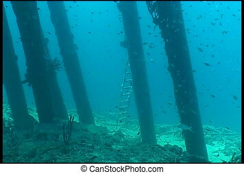 underwater diving video - diving underwater video