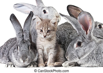 Cute animals - Image of fluffy kitten with group of grey...