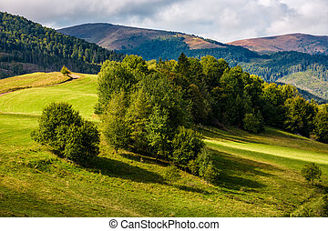 forest on hillside meadow in mountains - forest on hillside...