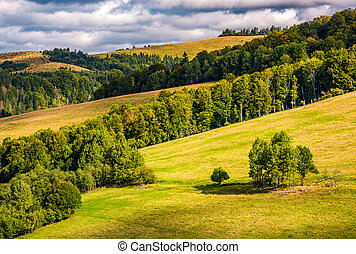 forest on rolling hills under cloudy autumnal sky - forest...
