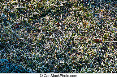 fallen leaves on a frosted grass. lovely nature background....