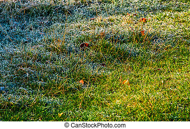 fallen leaves on a frosted grass. lovely nature background