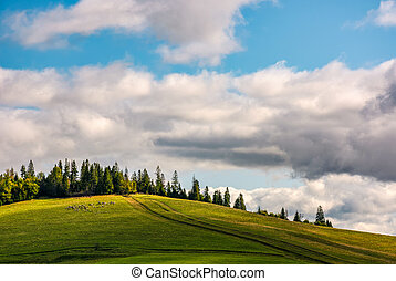 flock of sheep on hillside meadow near the forest - flock of...