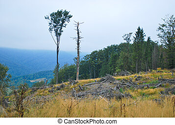 Cleared forest - Mountain landscape with forest glade and...