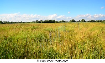 Wild grass in a vacant lot in wind - Wild grass in a vacant...