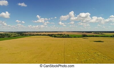 Rural landscape with field of rye - Rural landscape with a...
