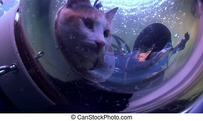 Cat scuba diver on background of reflection sunlight...