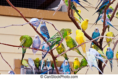 Colorful Parakeets on Bare Tree