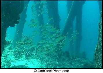 underwater diving video - diving underwater video