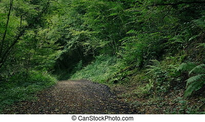 Scenic Path Through The Forest - Dirt path through the...