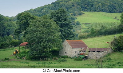 Peaceful Farm Scene With Barn And Cows - Rural scene of old...