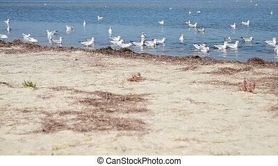 a flock of sea gulls floating on the water