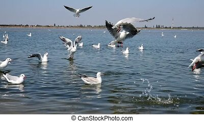 a flock of sea gulls floating on the water and flying over...