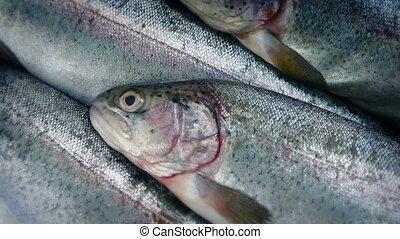 Raw Fish Rotating - Raw fish rotating macro shot